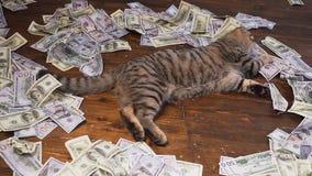 Кот богачей видеоматериал