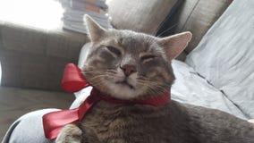 Кот боять в после полудня стоковое фото rf