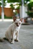 Кот болезни рассеянный Стоковые Фотографии RF