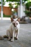 Кот болезни рассеянный Стоковые Изображения RF