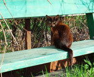 Кот бродяги Стоковые Фото