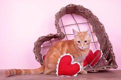 Кот валентинки стоковая фотография rf