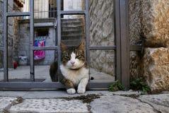 Кот Венеции стоковое фото rf