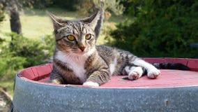 Кот вина стоковая фотография