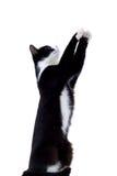 кот вне достигая Стоковая Фотография
