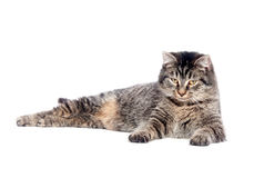 кот вниз кладя tabby Стоковые Фото