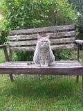 Кот возвышенность стоковое фото