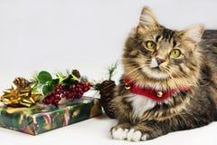 Кот времени рождества Стоковое Изображение