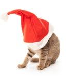 Кот вставленный на шляпе Санты на белизне Стоковое фото RF