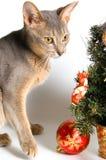 кот встречает Новый Год стоковые изображения