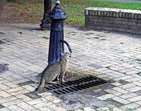 Кот выпивая от водяного столба Стоковые Фотографии RF
