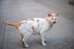 Кот вытаращиться готовый для того чтобы атаковать Стоковое фото RF