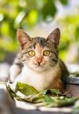 Кот вытаращить интенсивно Стоковые Изображения