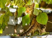 Кот вытаращить интенсивно Стоковые Изображения RF