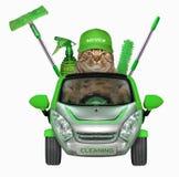 Кот в автомобиле фирмы чистки стоковое изображение rf