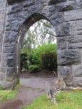 Кот в арке Стоковая Фотография RF