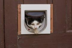 Кот в двери Стоковые Фотографии RF