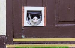 Кот в двери Стоковое Изображение