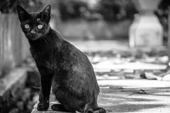 Кот в виске Стоковое Фото
