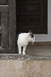 Кот в входе Стоковые Изображения