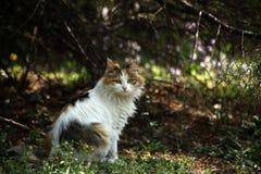 Кот в лесе Стоковая Фотография RF