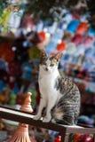 Кот в летнем времени Стоковое Изображение