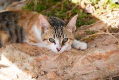 Кот в летнем времени Стоковые Фото