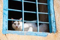 Кот в летнем времени Стоковое Фото