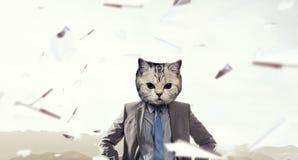 Кот в деловом костюме Мультимедиа Стоковые Фотографии RF