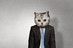 Кот в деловом костюме Мультимедиа Стоковая Фотография
