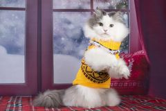 Кот в желтом свитере смотрит вне окно на снеге стоковое изображение rf