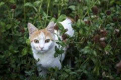 Кот в зеленой траве Стоковое Изображение RF