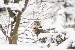 Кот в зиме Стоковая Фотография
