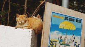 Кот в зоне туризма Стоковая Фотография