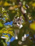 Кот в листьях Стоковая Фотография