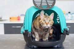 Кот в конуре на ветеринарной клинике стоковые фотографии rf
