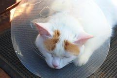 Кот в конусе Стоковые Фото