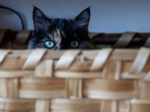 Кот в корзине в милане стоковая фотография rf