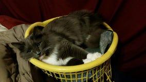 Кот в корзине стоковые фото