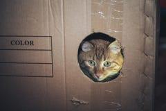 Кот в коробке стоковая фотография rf