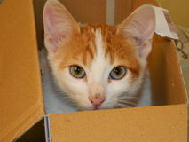 Кот в коробке Стоковое Изображение