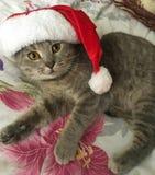 Кот в костюме стоковые фотографии rf