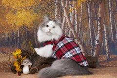 Кот в красной рубашке ищет грибы в лесе стоковая фотография rf