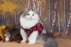 Кот в красной рубашке ищет грибы в лесе стоковое изображение