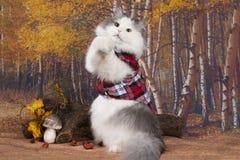 Кот в красной рубашке ищет грибы в лесе стоковые фотографии rf