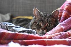 Кот в кровати Стоковые Изображения