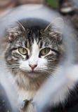 Кот в Кубе Стоковые Изображения RF