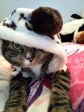 Кот в клобуке Стоковая Фотография RF