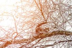 Кот в марте на дереве после снежностей Стоковая Фотография