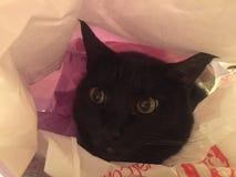 Кот в мешке Стоковое Изображение RF